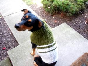 dog in a crochet sweater